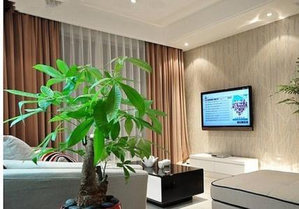 植物摆放有讲究!卧室、厨房、卫生间你都放了哪些植物?