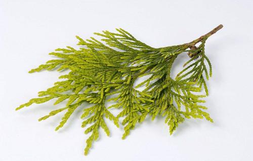 侧柏叶的功效有哪些 侧柏叶泡水喝有什么好采柏叶,桃枝,煎汤沐发.图片