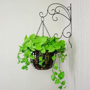 新房装修后,有哪些植物除甲醛。