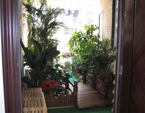 入户门口放什么植物好 这八种植物适合放在入户门口