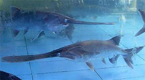 淡水鱼的种类图片欣赏 世界顶级淡水鱼的种类图片