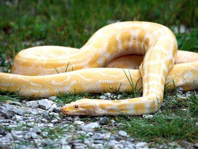梦见父母的床下有蛇