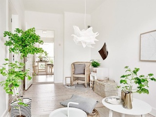 绿色植物装饰纯美北欧小户型单身公寓效果图