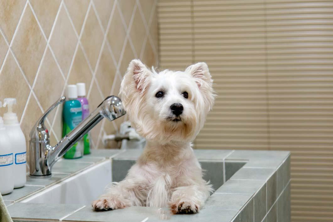 洗脸池图片