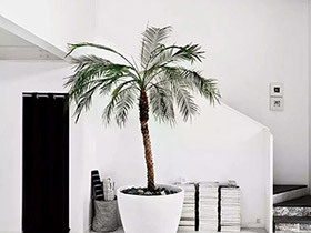 10个客厅植物摆放效果图 把绿色请进家