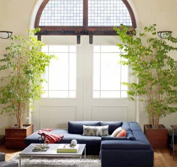 植物家居装修装饰效果图
