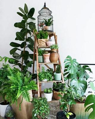 阳台绿植装饰效果图
