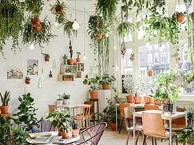 绿色大花园  10款室内绿植布置设计图片