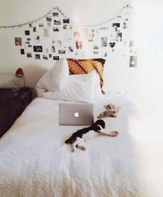 室内照片墙设计实景图