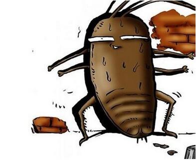 家里有蟑螂怎么办能除根 防止蟑螂的方法